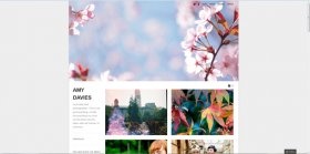 Free photography websites: WordPress